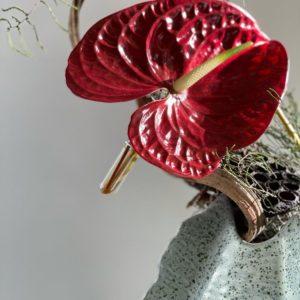 Liane, tillantia e fiori di anthurium ANDREA PATRIZI FLOWER SHOP