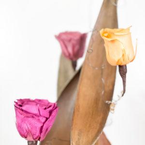 Cape de cocco, portasemi fiore di loto e rose stabilizzate   Andrea Patrizi Flower Shop