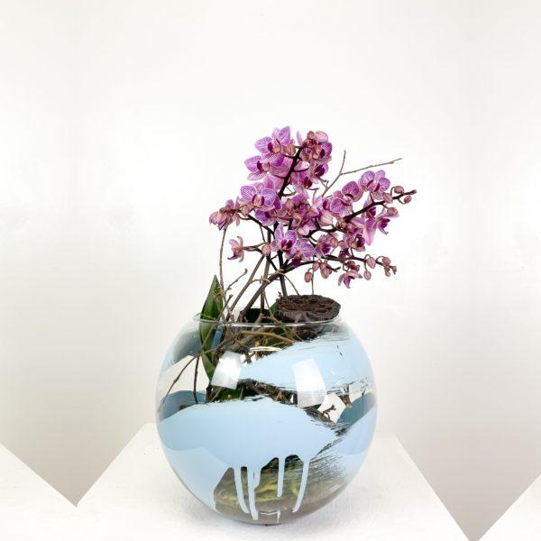 Orchidea Phalenopsis | Andrea Patrizi Flower Shop